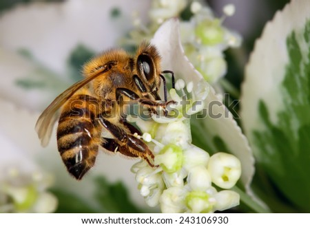 bee close up on a flower - stock photo