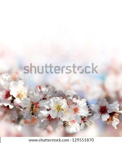bee collecting nectar from the flowers of the peach tree on a blurred background - stock photo