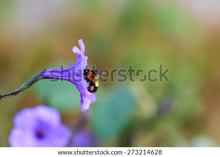 Bee collecting pollen from flowers in the morning - stock photo