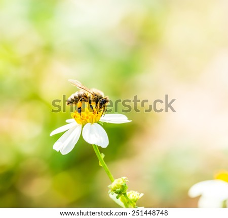 bee eat pollen of flower - stock photo