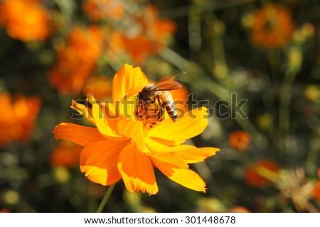 Bee & Flower - stock photo