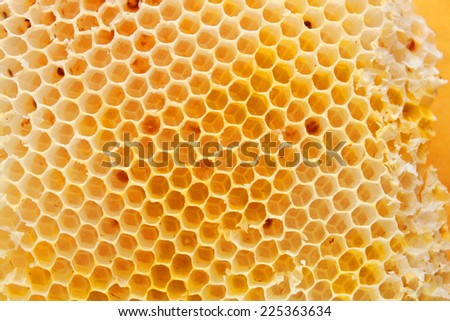Bee hive background - stock photo