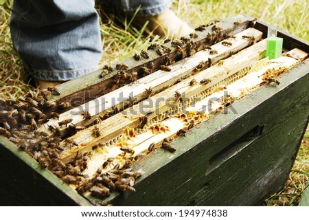 bee hive man honey nature beekeeper - stock photo