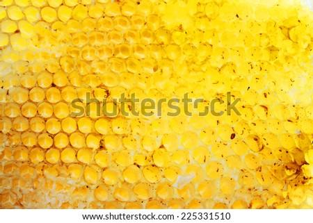 Bee hive texture - stock photo
