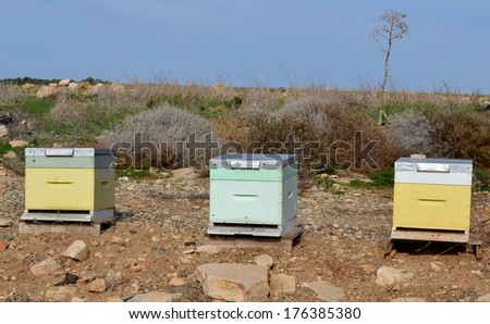 Bee hives and blue sky