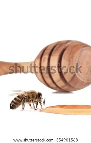 bee honey - stock photo