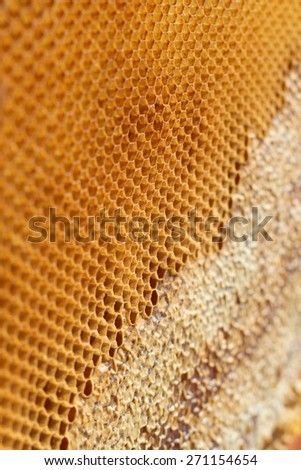 Bee honeycomb cell close up detail background - stock photo