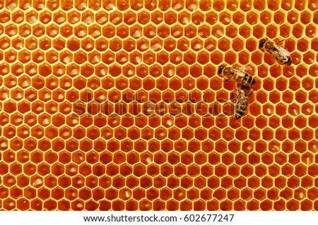 Bee Honeycombs With Honey And Bees Apiculture