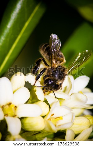 Bee in flower - stock photo