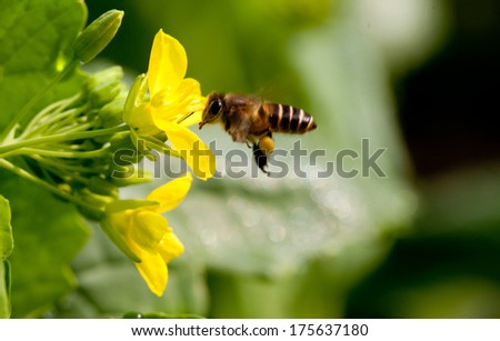 Bee in flower  - stock photo
