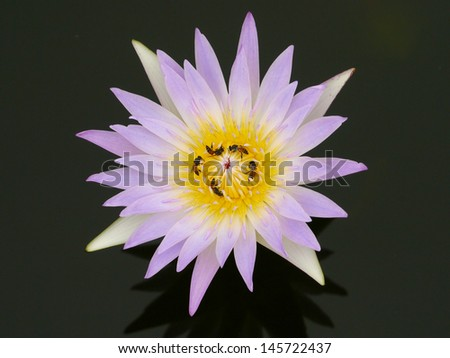 bee  in purple Beautiful lotus