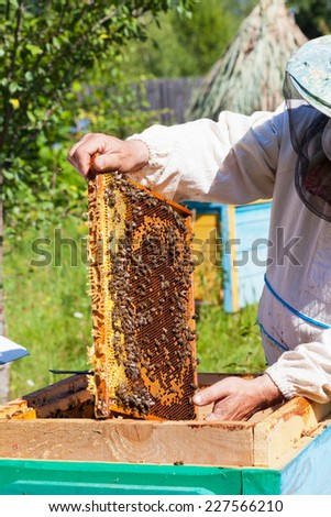 Bee-keeper holds in hand a frame with honey honeycombs and bees - stock photo