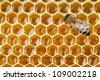 bee macro shot collecting honey in honeycomb - stock photo