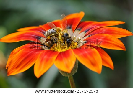 bee on a beautiful flower - stock photo