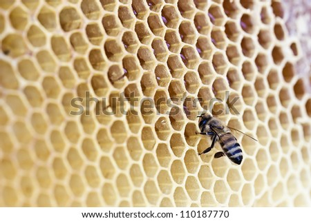 Bee on a wax background - stock photo