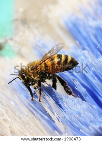 bee on broom - stock photo