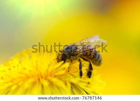 Bee on dandelion - stock photo