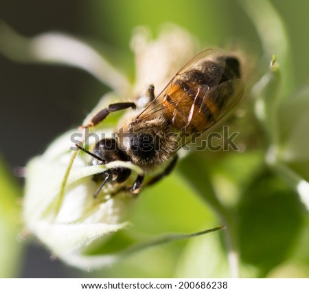 bee on flowers in nature. macro