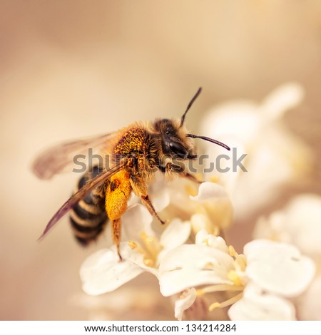bee on the summer flower - stock photo