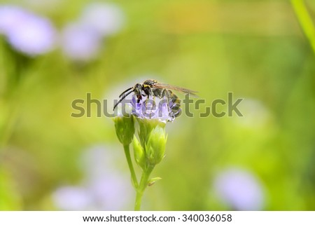 Bee perched on a flower in the meadow, soft , bright sunlight . - stock photo