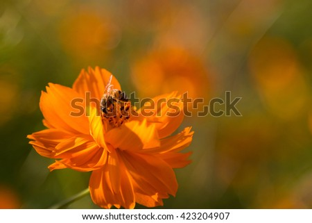 bee / pollination /flower
