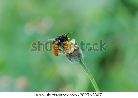 bee pollination flowers