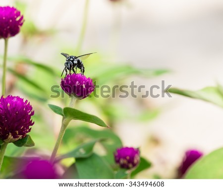 Bee sucking nectar from flower - stock photo