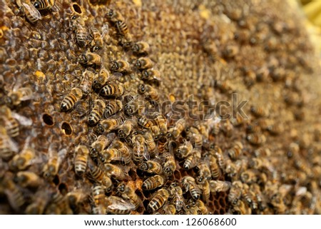 Bee Swarm at work at the hive - stock photo