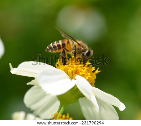Bee to a flower. - stock photo