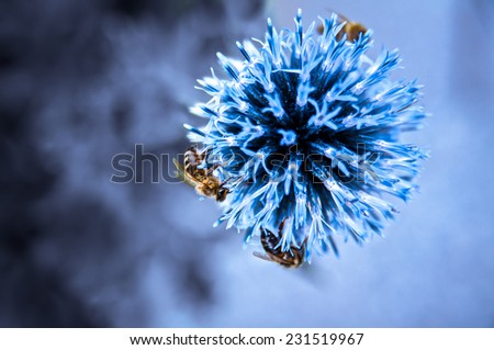 bee with flower with blue background