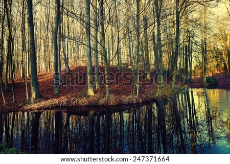Beech forest and its reflection in the lake. - stock photo