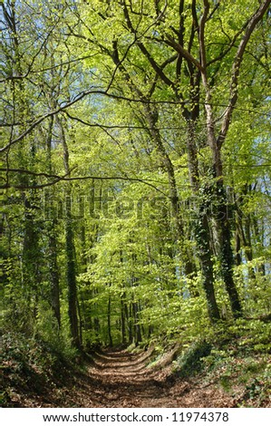 beech forest in Spring, Kaiserstuhl, Germany