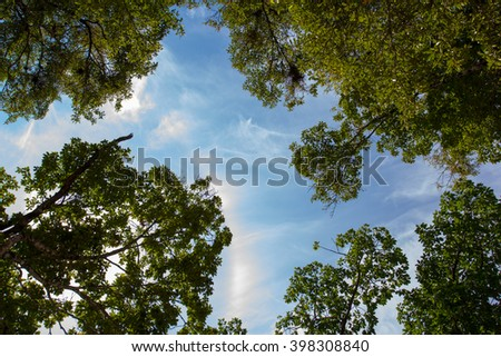 Beech forest in spring with the sun in the trees - stock photo