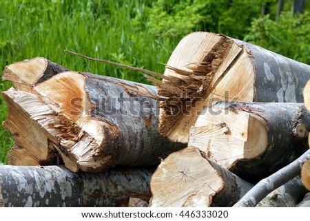 beech logs cut near the wood