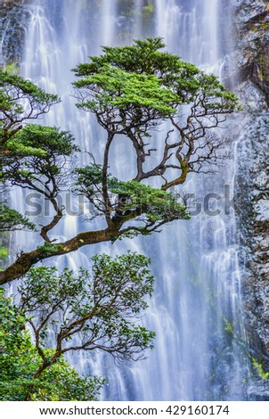 Beech trees against a backdrop of falling water in Arthur's Pass, New Zealand.