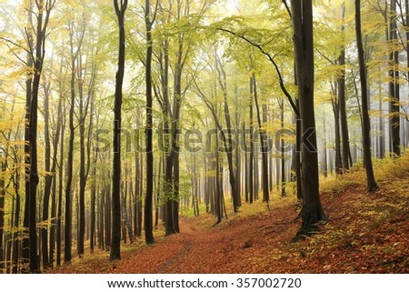 Beech trees in autumn forest in the mountains. Europe, Poland. - stock photo