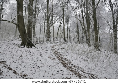 Beech Trees in the Snow, Dursley Woods