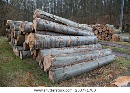 Beech trunks - stock photo