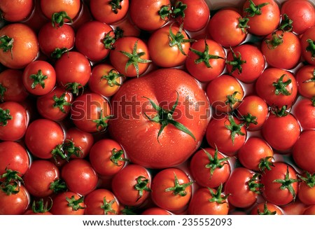 Beefsteak tomato among cherry tomatoes background