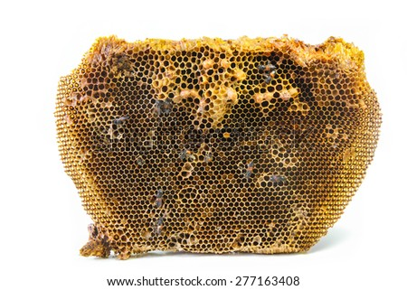 Beehive and the red dwarf honey bees, wild honey bees of southern and southeastern Asia. - stock photo
