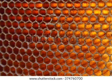 beehive close up texture