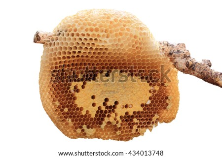 Beehive closeup on stick isolated on white background. - stock photo