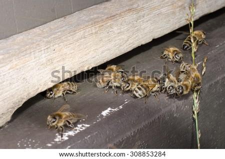 beehive entrance hole - stock photo