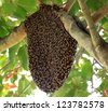 Beehive hangs on a tree - stock photo