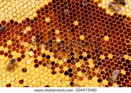 Beehive texture - stock photo