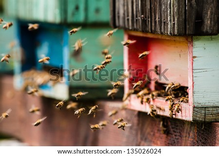 Beehive with bees - stock photo