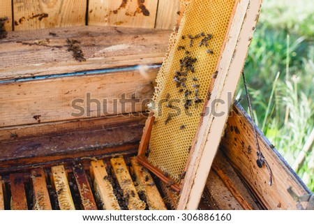 Beehive with different wooden frames of honeycomb, one frame, with bees on it, is put off, standing in the yard, close up - stock photo