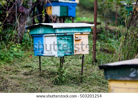 beehives in the middle of a meadow. Hives of bees in the apiary, Apiculture