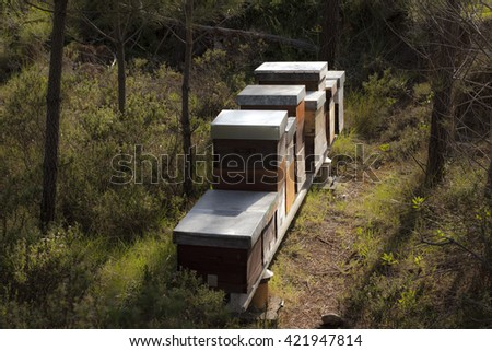 beehives on meadow in countryside
