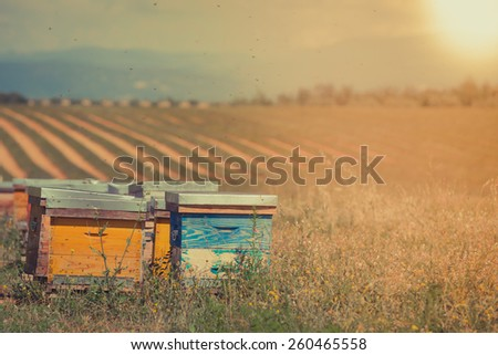 Beehives on the sunflower field in Provence, France. Filtered shot - stock photo